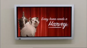harvey-the-dog