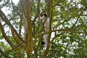 cat-in-tree-peeking